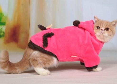 Сделать котенку одежду своими руками