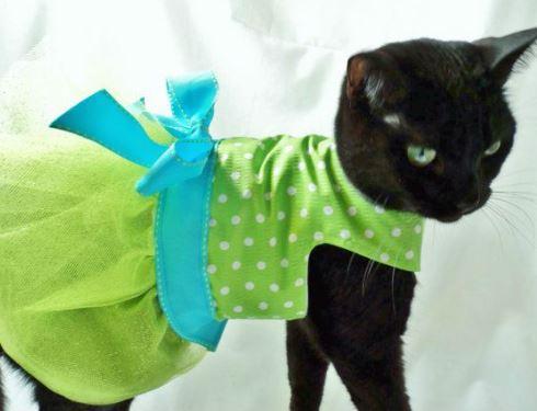 Платье на кошку сшить 55