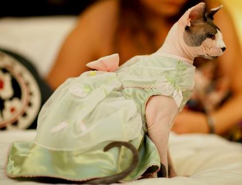 красивое платье кошке