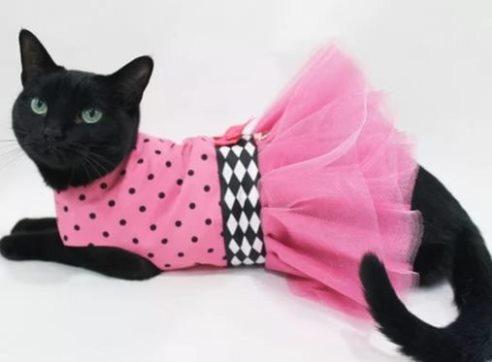 Сшить платье для кошки своими руками