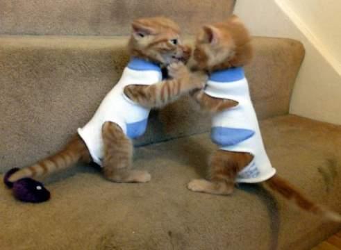одежда для кота из носка